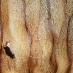 Шкурки лисицы выделанные (Красная)
