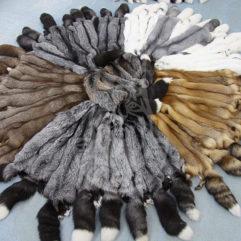 Шкурки лисицы пресно-сухие